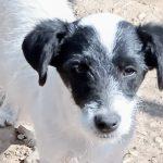 Pup Lolec is in de opvang in Patras