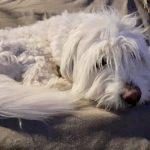 Buby is in een gastgezin op Lesbos