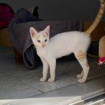 Kitten Holly is gereserveerd