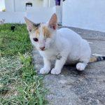 Kitten Frummel is gereserveerd