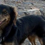 Lucy is in een opvang op Lesbos