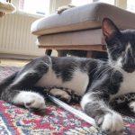 Kitten (Pietje) Puck is in een gastgezin in Utrecht